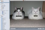 Apple iPhoto can differentiate between cats