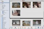 ilife_photo_cat_face_recognition_2