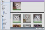 ilife_photo_cat_face_recognition_3