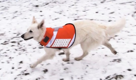Internet-enabled Messenger Dog concept is brilliantly bizarre [Video]