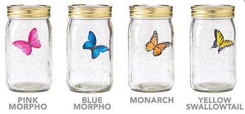 Electric Butterfly in a Jar is not cruel