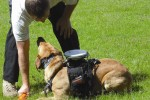 GPS Backpack for Dogs Created by Auburn University's Canine Detection Research Institute
