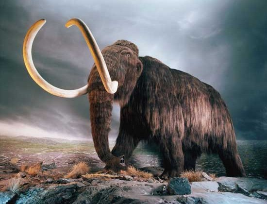 Scientist Aims to Bring a Woolly Mammoth to Life by 2016