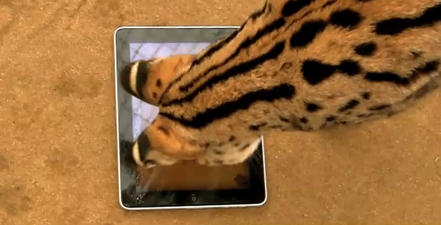 iPad Game for White Tigers Mimics Kitten Mittens Vibe
