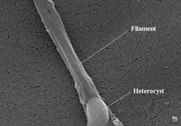 Alien Fossils Found (Maybe) Inside Meteorites