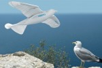 Festo SmartBird is an automated mechanical herring gull