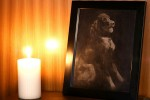 Gross photo of deceased pet is made from pets own ashes