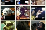 Google's Photovine iOS App Launches [Hands-On]