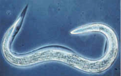 Worms shot into space show humans could survive a trip to colonize other worlds