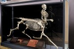 Awesome exhibit shows mythological creature skeletons