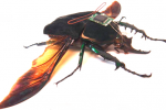 Cockroach RoboBugs could be coming soon — espionage at its finest