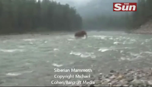 Video claims to show long extinct woolly mammoth crossing a Siberian river