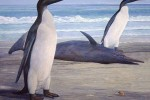 Fossils show giant penguin once roamed New Zealand
