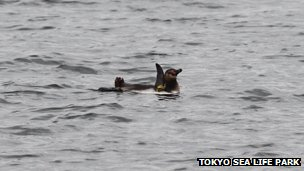 "Escaped penguin evades capture by swimming at ""tremendous speed"""