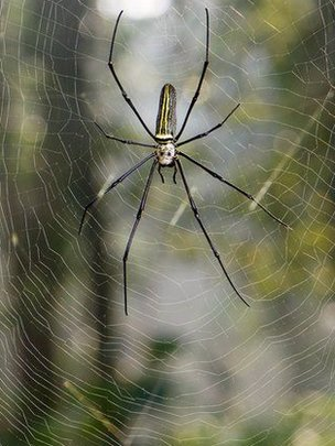 Researcher creates violin strings out of spun spider silk