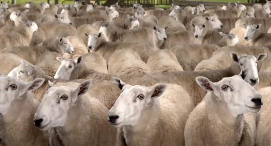 New Samsung Galaxy S III trailer boasts powerful technology…and sheep