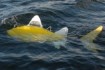 Robot fish released to the sea to clear pollution