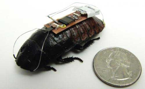 Researchers develop remote-controlled cockroaches