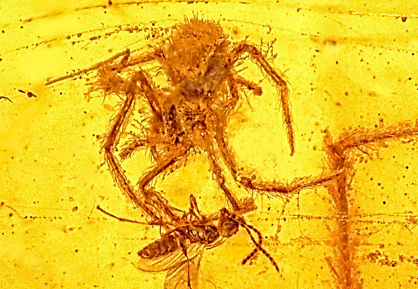 Ancient fossil showing spider attack is one-of-a-kind