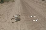 Google denies claim that a Street View car hit a donkey