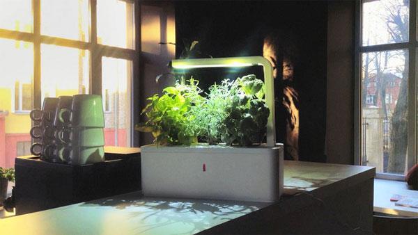 Smart Herb Garden germinates on Kickstarter
