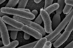 E. coli enzymes turned into biofuel identical to gasoline