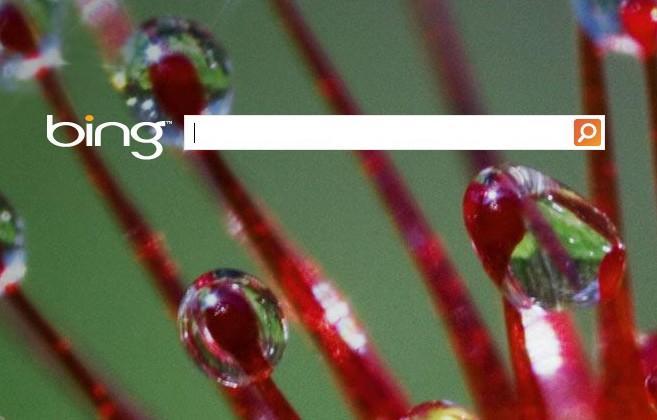 Microsoft's Bing shows five times more malware than Google