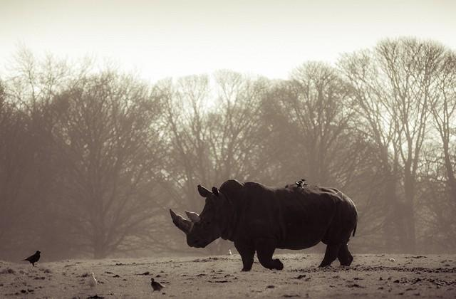 Rhinos extinct in Mozambique National Park
