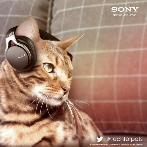 sony_cat_cans