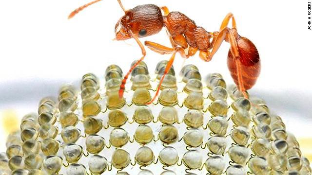 Scientists building bug POV digital camera