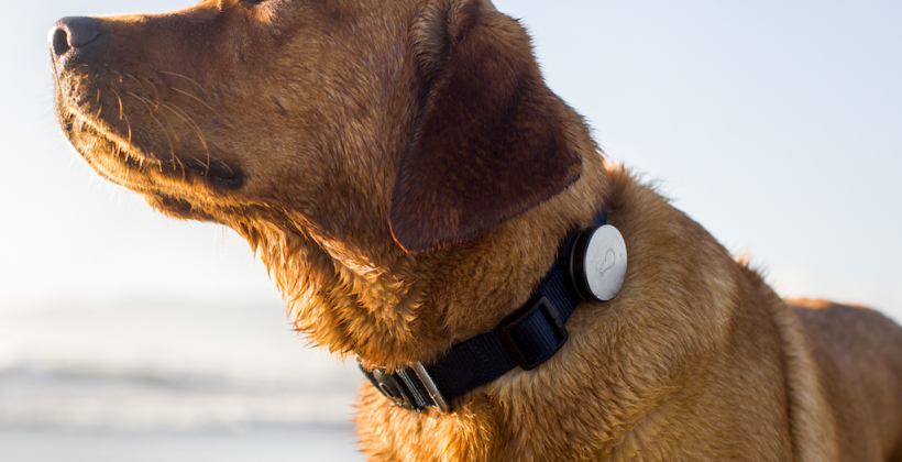 Whistle brings wireless wearables to dogs