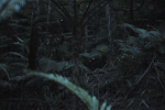 Canon uses high-sensitivity 35mm full-frame sensor to record HD fireflies in the dark