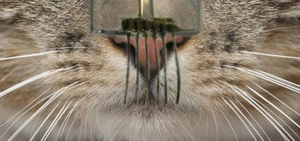 E-whiskers could give robots cat-like supersenses