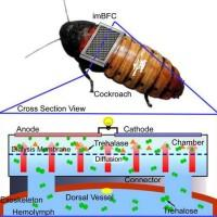 Fuel cell equipped cockroaches to form self-powered sensor network