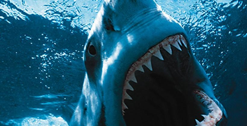 Wearables for sharks: Life-logging misunderstood predators
