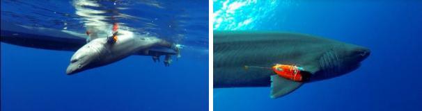 shark-wearables