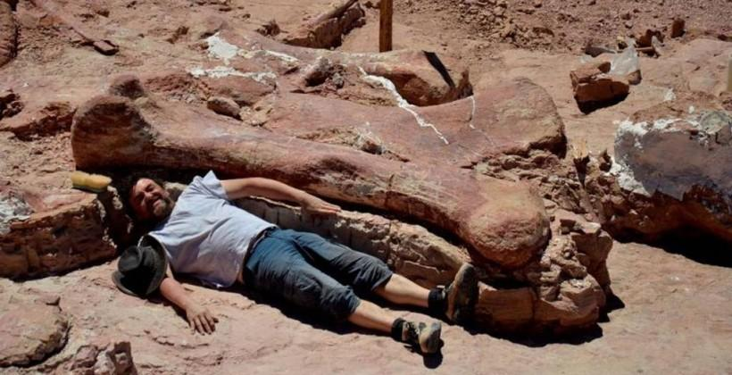 Largest ever dinosaur species unearthed