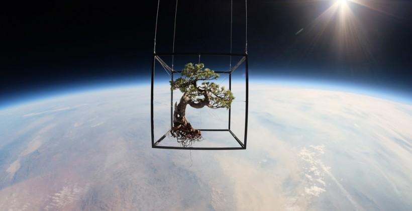 Artist teams with JP Aerospace to photograph plants in space