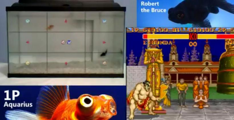 Watch fish play Street Fighter or Pokemon now