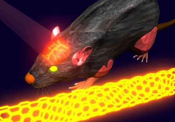 Lasers and carbon-nanotubes pave way to live brain scanning