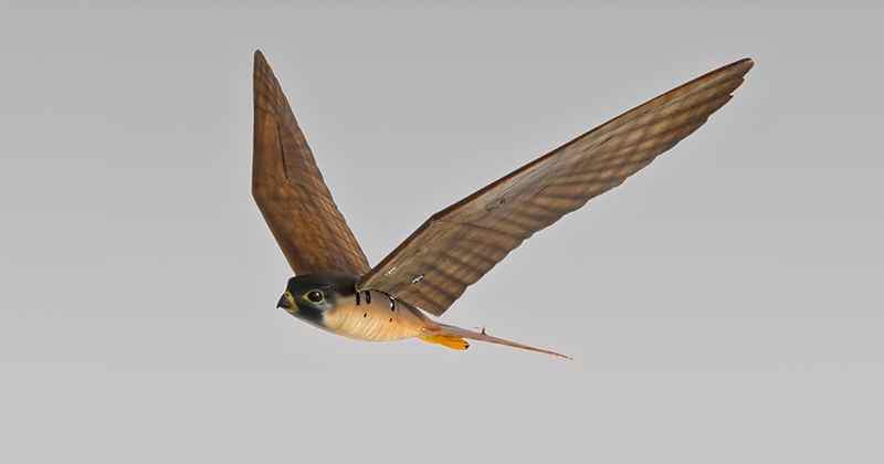 This robot bird of prey is designed to scare real birds