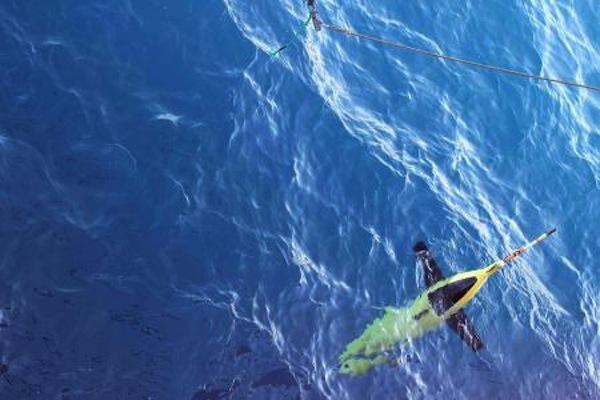 Robot dolphins go deep to understand Antarctic melt