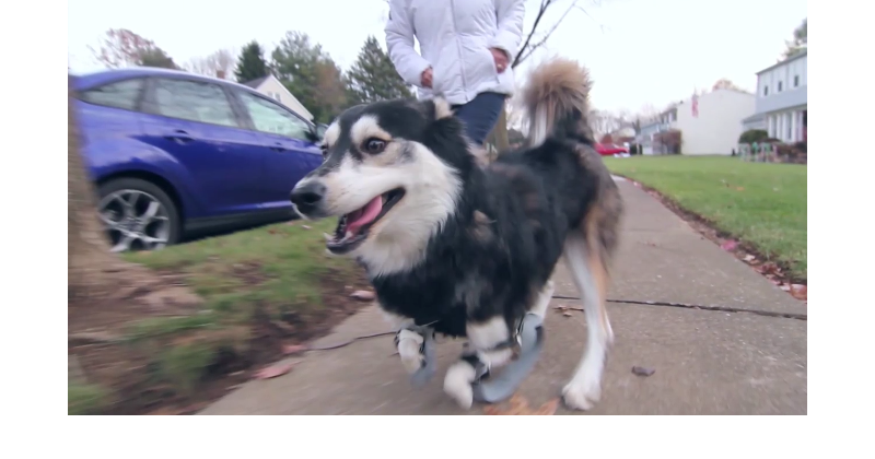 3D Printing gives a dog back his legs