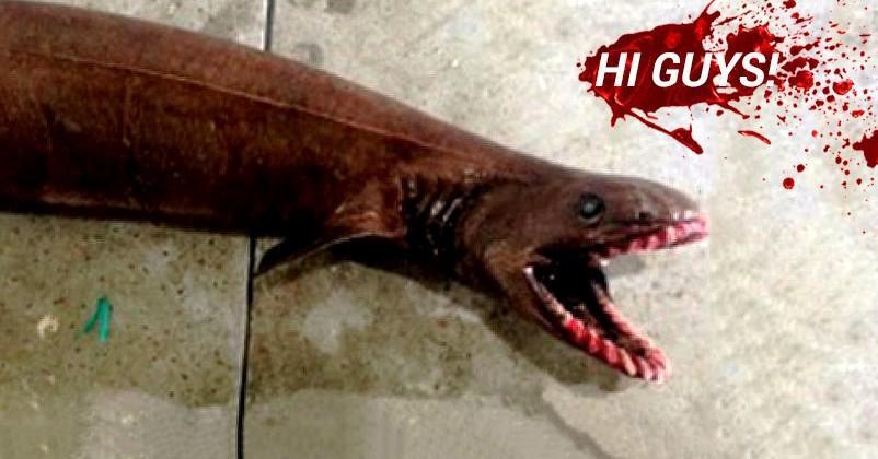 "Frill Shark ""living fossil"" found alive in Australia"