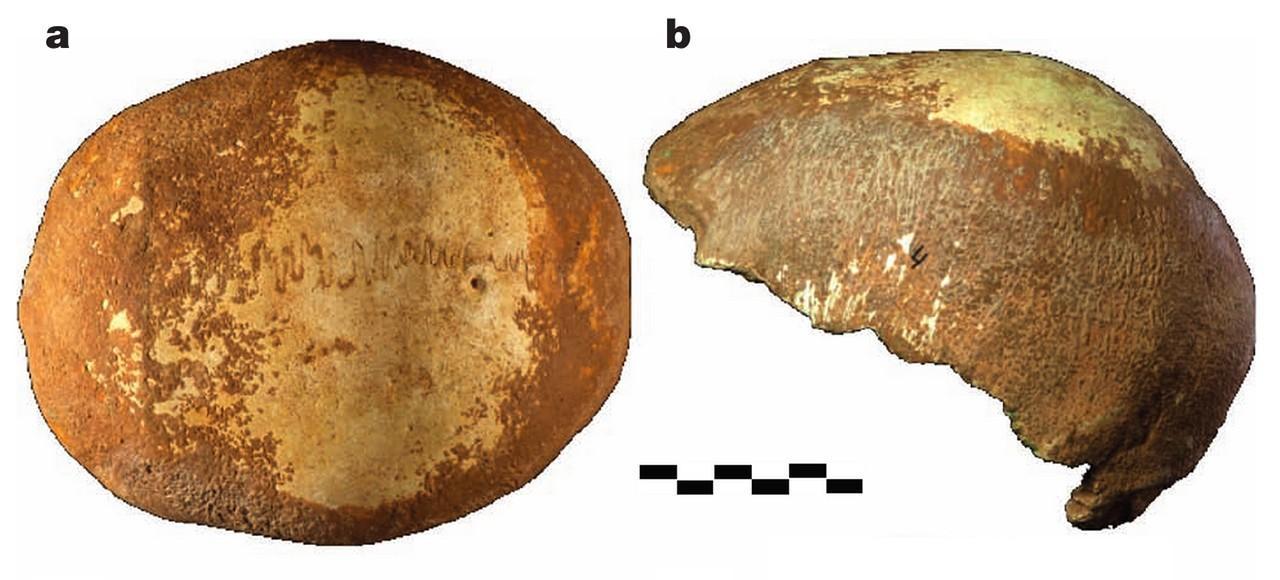 skullfrags1