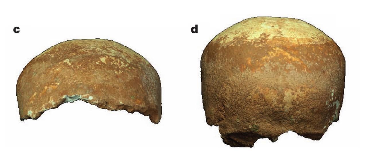 skullfrags2