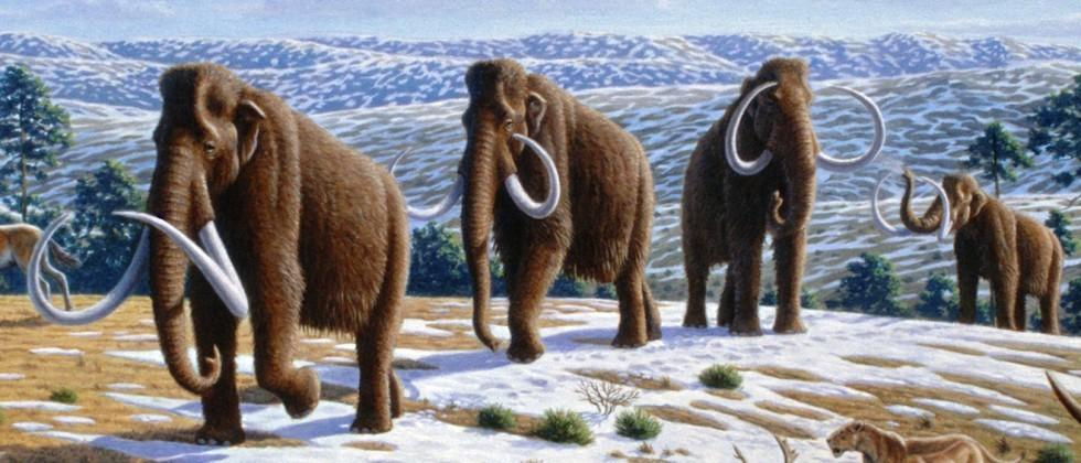 Real Jurassic Park? Woolly mammoth genes spliced into elephant DNA