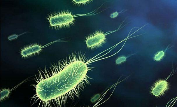 White House details plan to fight drug-resistant bacteria
