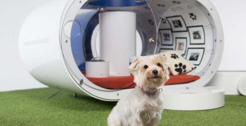 Samsung Dream Doghouse includes hot tub