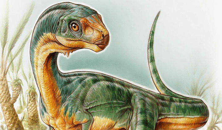 New 'Chilesaurus' therapod was an adorable vegetarian
